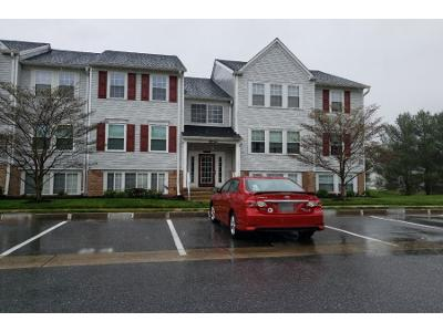 Whips-ln-#-43-Nottingham-MD-21236