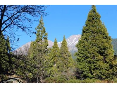 24-north-ridge-drive-Mt-shasta-CA-96067